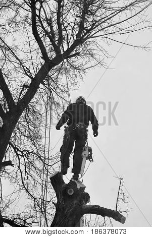 Male worker removing broken limbs off a tree outside.
