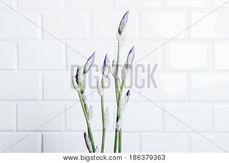 Bouquet Of Unblown Flower Iris On A Background Of White Brick Wall