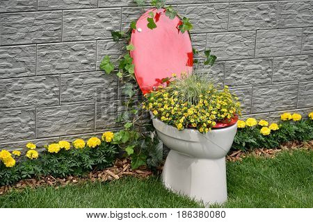 Small yellow flowers growing from red and white toilet with the gray waal and green grass as bacground...photo taken on FloraArt Zagreb