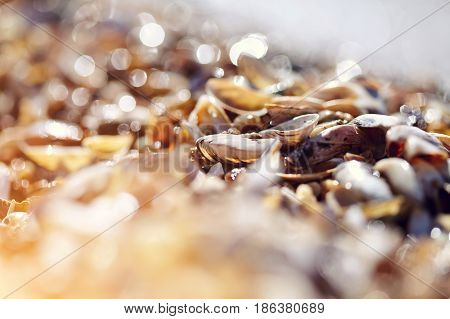 Background with bokeh with shells on the shore on a sunny day.
