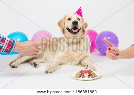Happy smiling golden retriever puppy dog with birthday hat and meat cake. Isolated on white background