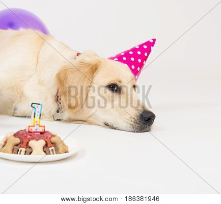 Golden retriever puppy dog with birthday hat and meat cake. Isolated on white background
