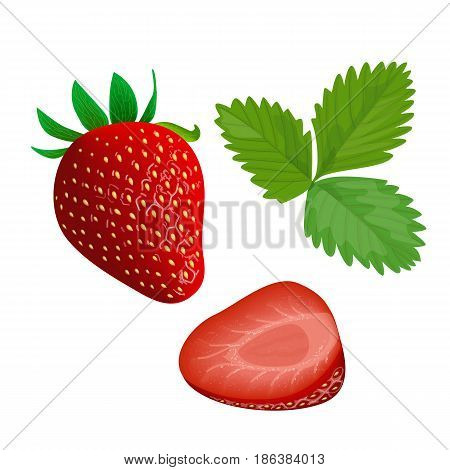 Ripe juicy Strawberry isolated on white. Whole, slice and leaf. Close up. vector illustration. for food design, cooking, cosmetics, perfume, ointment. health care, ointments perfumery label tag
