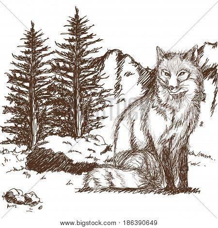 wolf wildlife animal image is hand drawn. pencil sketch of wolf landscape vector illustration