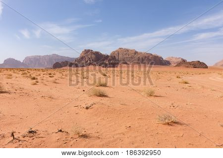 Great expanse of the Wadi Rum Desert with orange sand and rocky mountains in the distance. Blue sky with thin clouds is above. Foreground shows sparse vegetation.