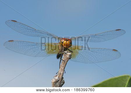 Damselfly Or Dragonfly