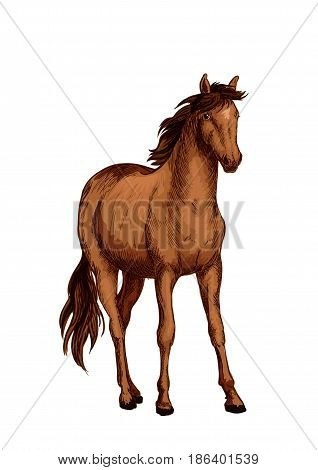 Horse of arabian breed isolated sketch. Purebred chestnut mare horse with brown mane and tail. Equestrian sport, horse racing, breeding farm or riding club design
