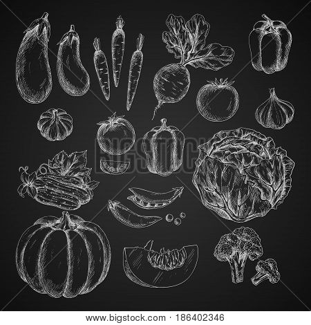 Vegetables sketches on blackboard. Vector isolated icons of cabbage and pumpkin, broccoli and pea or beans, bell pepper. Farm veggies tomato and cucumber, garlic or carrot, beet and eggplant harvest