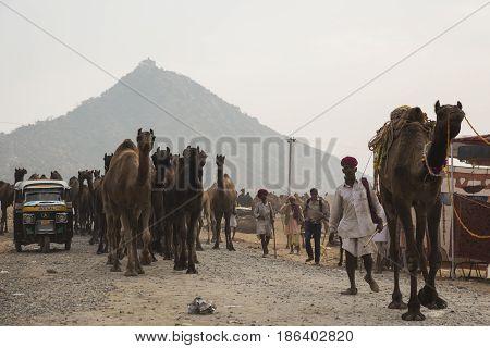 Camel Caravan Travel