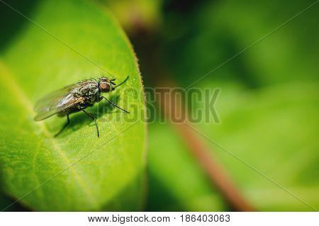 Little black fly sitting on green leaf