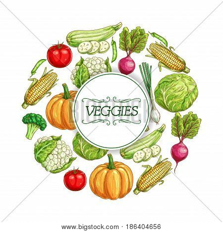 Vegetable sketch poster. Fresh tomato, cabbage, green onion, broccoli, zucchini, corn, pumpkin, fresh pea, beet and cauliflower veggies frame with copy space in center for farm market label design
