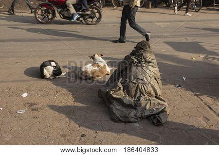 homeless man and stray dog on street in old delhi of Delhi India