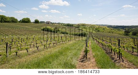Beautiful Landscape On The Vines Near Bordeaux In France