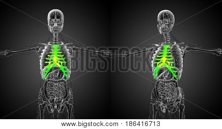 3D Rendering Medical Illustration Of The Sternum And Cartilage