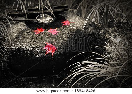 Japanese tsukubai washbasin in black and white with isolated color on red autumn maple leaves