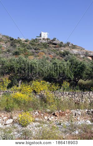 olive trees and yellow flowers near stoupa in mani on greek peloponnese under blue sky in spring with typical tower house in mountain landscape