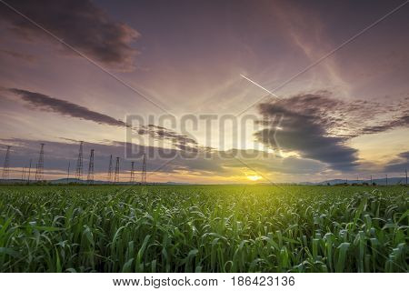 Vast green field at gorgeous sunset a colorful panoramic landscape