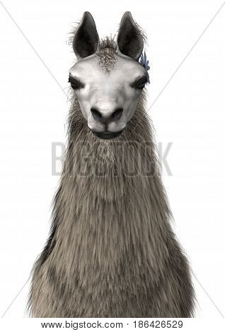 3D Rendering Llama Or Lama On White