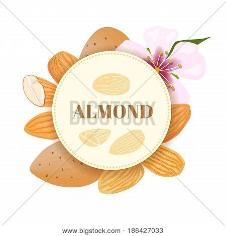 Almonds. nuts in skins and peeled with flower. whole and halves. Kernels. vector illustration. round badge with text. for cooking, cosmetics, Herbal medicine, skin and hair care, ointments, perfumery