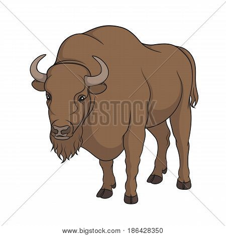 Color vector image of bison. Isolated object on white background