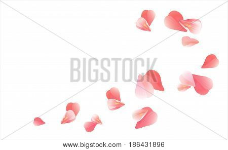 Petals Roses Flowers. Pink Red Sakura flying petals isolated on white background. Vector EPS 10, cmyk