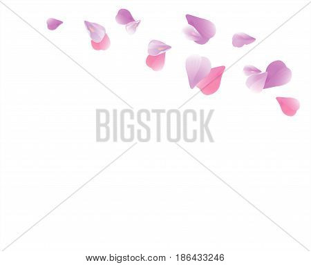Petals design. Flower background. Petals Roses Flowers. Pink Purple Sakura flying petals isolated on white background. Vector EPS 10, cmyk