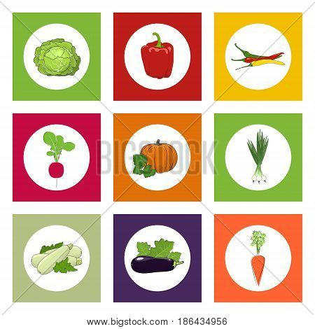 White Icons Vegetables on Colorful Background, Pumpkin and Hot Pasilla Chile Pepper , Green Onion and Radish, Zucchini Courgette and Sweet Peppers, Eggplant and Carrot , Cabbage, Vector Illustration