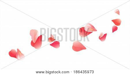 Sakura flying petals isolated on white background. Pink Red Petals Roses Flowers. Vector