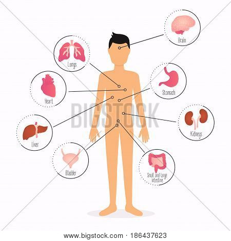Human body with internal organs. Human body health care infographics.
