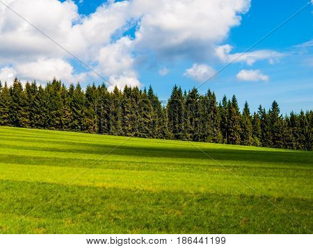 Lush green and freshly mowed meadow on sunny summer day. Rural landspace with green coniferous forest, blue sky and white clouds on the background.
