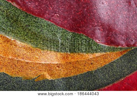 Tklapi - dried mashed fruit pulp / Colorful fruit leather from apricot kiwi dogwood. Georgian and Armenian cuisine. Food background.