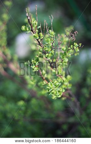 The green young shrub in spring's nature