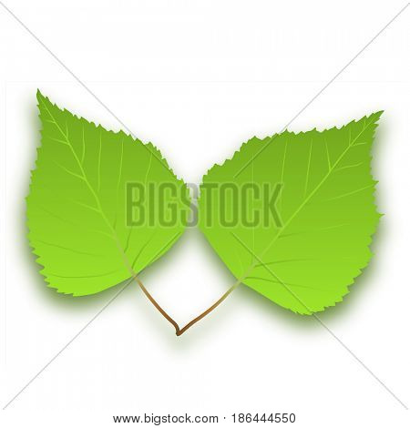 Green Tree Leaves on a white background. illustration.