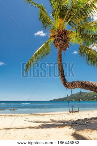 Palm on the beautiful beach at Seychelles.