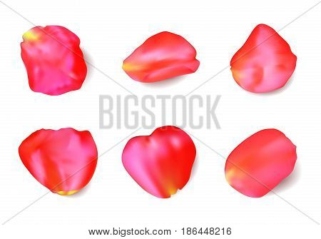 Red rose petals set isolated on white background. Realistic vector illustration
