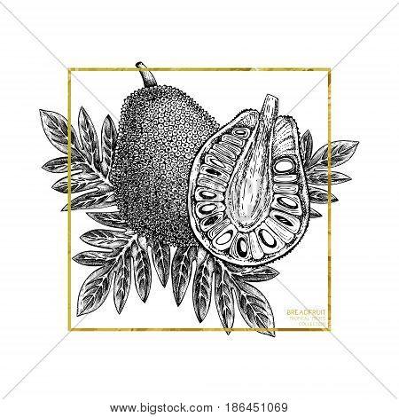 Engraved botanical sketch. Vintage jack fruit design. Tropical plant frame.Gold Wedding template