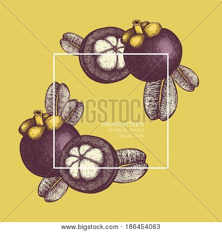 Purple mangosteen fruit hand drawn illustration. Engraved botanical sketch. Tropical evergreen tree design.