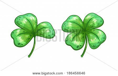 Realistic clover leaves. Vector shamrock icons, isolated on white background.