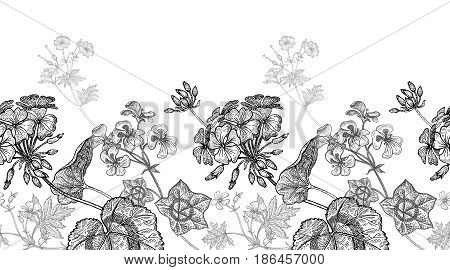 Geranium flower. Seamless floral pattern border. Vector illustration. Hand drawing art. Black and white graphics. Vintage engraving. Template design for packaging textile paper wallpaper fabric.