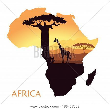 Sunset in the Savannah. The landscape in the form of a map of Africa
