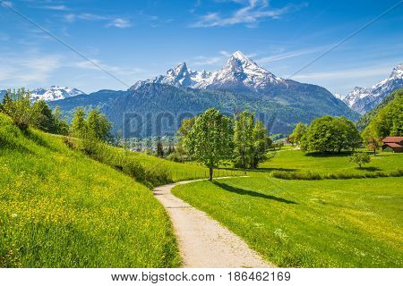 Idyllic Spring Landscape In The Alps With Meadows And Flowers