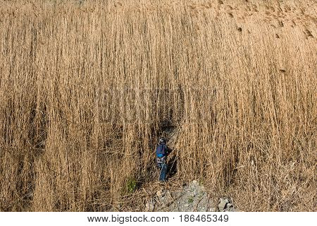 Cute little boy walking in tall dry grass at cloudy autumn day.