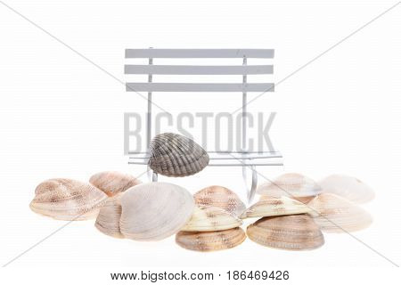 Conch Mollusc Shells On Sea Bench Isolated On White