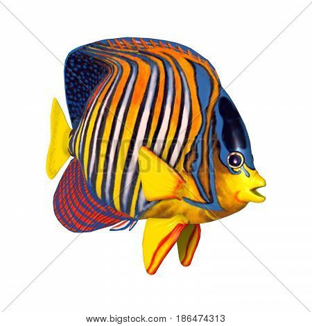 3D Rendering Royal Angelfish On White