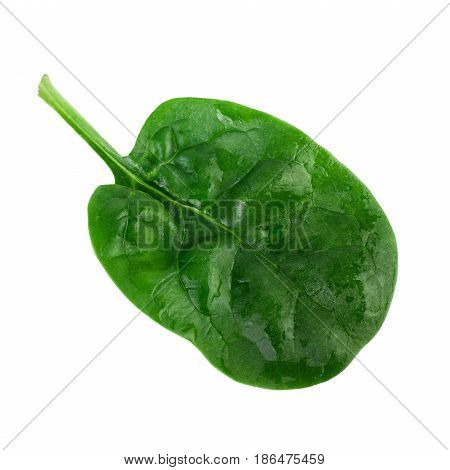 Spinach leaf. One fresh green spinach leaf isolated on white background