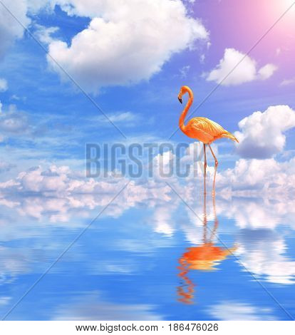 Flamingo on blue water on sunny sky background with reflection in water and clouds