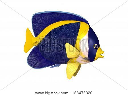 3D Rendering Scribbled Angelfish On White