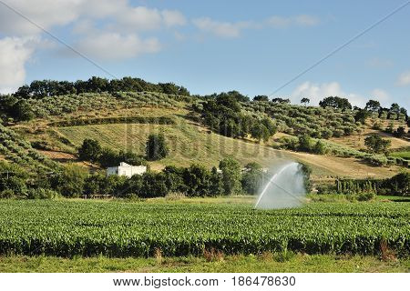 Rural landscape - cultivated land and hills day view