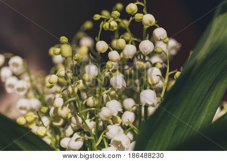 Beautiful bouquet of lilies of the valley close-up image, selective focus
