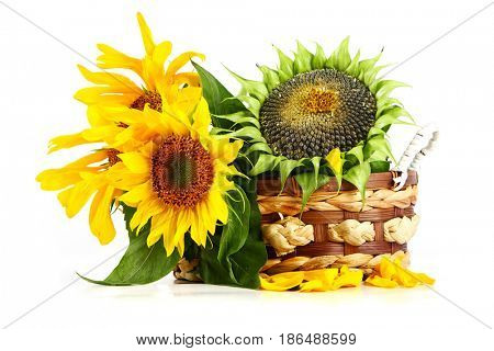 Yellow sunflowers and sunflower seeds on a white